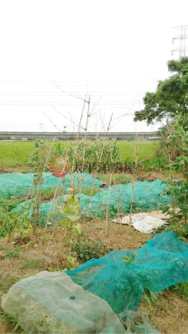 ◆高鐵社子溪便宜田◆,桃園市楊梅區民豐段