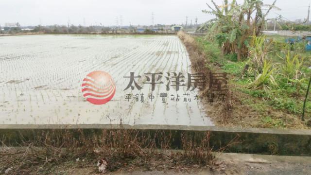 ◆新屋前後臨路田◆,桃園市新屋區槺榔段