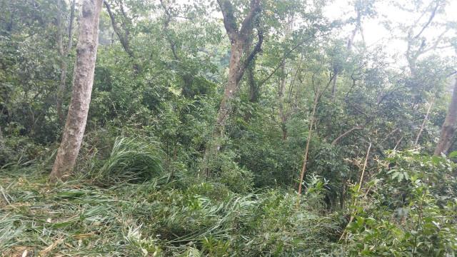 ◆獅潭八角林段農田地◆,苗栗縣獅潭鄉八角林