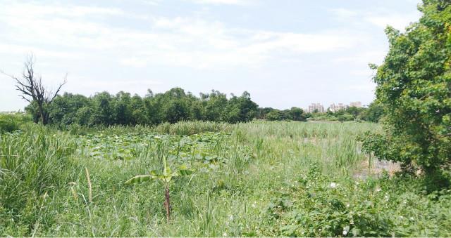 ◆平鎮賦北段都內農地◆,桃園市平鎮區賦北段