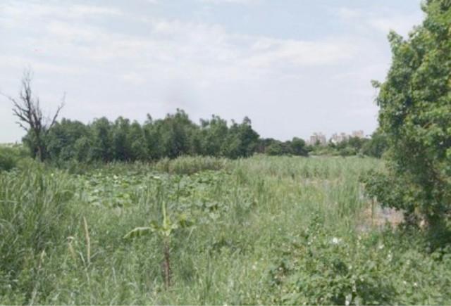 ◆平鎮賦梅路都內農地◆,桃園市平鎮區賦北段