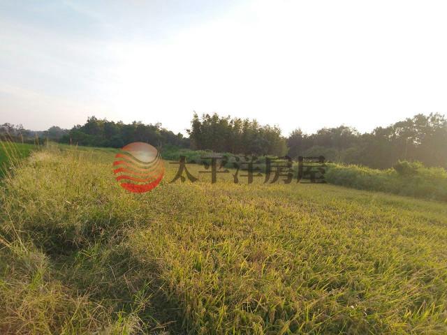 ◆台61線一般農田◆,桃園市新屋區大牛欄段